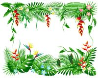 Palm leaves and tropical flowers stock photography