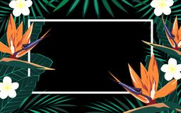 Tropical background with frame Royalty Free Stock Image