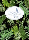 Tropic leaf banner Royalty Free Stock Photos