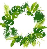 Wreath of tropical leaves royalty free illustration