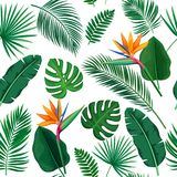 Tropical leaves seamless pattern. Vector tropical leaves and flowers seamless pattern. Jungle exotic strelitzia, banana leaf, philodendron, areca palm and royal Royalty Free Stock Photos