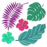 Vector tropical leaves. Hand drawn isolated leaves illustration Stock Photos