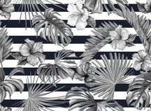 Vector tropical leaves hibiscus seamless pattern. Vector tropical leaves hibiscus flower blossom monochrome seamless pattern geometric background template Stock Photography