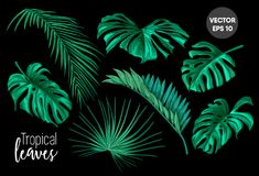 Vector tropical leaves monstera palm set. Vector tropical leaves summer set. black background illustration. Jungle forest palm monstera floral exotic plant aloha