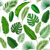 Tropical leaves seamless pattern. Vector tropical leaves seamless pattern. Jungle exotic banana leaf, philodendron, areca palm, royal fern and plumeria Royalty Free Stock Image