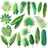 Vector tropical leaves Stock Images