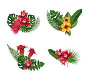 Vector tropical palm leaves and exotic flower Royalty Free Stock Photos