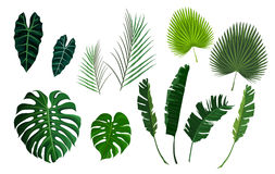 Vector tropical palm leaves, jungle leaves set. Tropical palm exotoc jungle leaves set. Banana, monstera green leaf isolated on white background. Vector Stock Photo