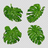 Vector tropical palm leaves. stock photo
