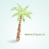 Vector tropical palm tree. Grunge vector Royalty Free Stock Photography