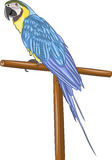 Vector. Tropical parrot. Stock Photo