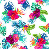 Vector tropical pattern. Amazing vector tropical flowers patten. seamless design with gorgeus botanical elements, hibiscus, palm, bird of paradise. Vector Stock Photography