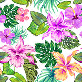 Vector tropical pattern with orchids. Vector seamless floral pattern in romantic colors. Exotic orchids Stock Images