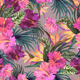 Vector tropical pattern with orchids. Stock Photos