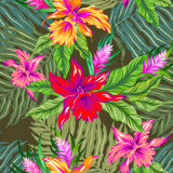 Vector tropical pattern with orchids. Very colorful vector hawaiian pattern. seamless design with exotic flowers and orchids. Vintage style illustration. Khaki Royalty Free Stock Photos