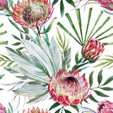 Vector tropical protea pattern Stock Image