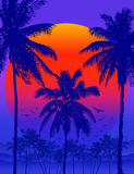 Vector Tropical sunrise Royalty Free Stock Images