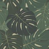 Vector tropisch naadloos patroon met donkergroene bladeren van monsterainstallatie Stock Afbeelding