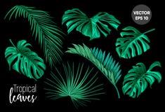 Vector tropische de palmreeks van bladerenmonstera Stock Fotografie