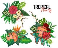 Vector tropische inzameling met exotische bloemen, bladeren en installaties vector illustratie