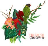 Vector tropische inzameling met exotische bloemen, bladeren en vogels royalty-vrije illustratie