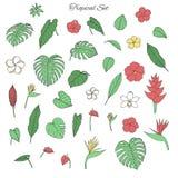 Vector tropische inzameling met monstera en banaanbladeren, hibi royalty-vrije illustratie