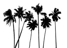 Vector tropische palmen Royalty-vrije Stock Foto's