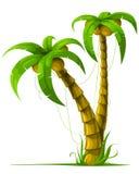 Vector tropische palmen die op wit worden geïsoleerd Stock Foto's