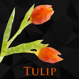 Vector tulip. Abstract flowers geometric. Vector tulip geometric black. Abstract flower. Polygonal design eps10 Stock Images