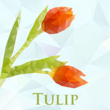 Vector tulip. Abstract flowers geometric. Vector picture with polygonal tulip flowers. Format eps 10 Royalty Free Stock Photography