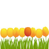 Vector tulip background Royalty Free Stock Images