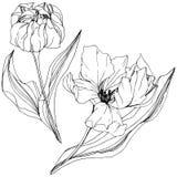 Vector Tulip Black y arte grabado blanco de la tinta Flor botánica floral Elemento aislado del ejemplo del tulipán libre illustration