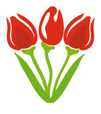 Vector tulips. Nice illustration of a tulips Stock Photos