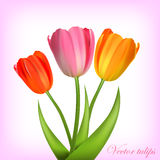 Vector tulips Stock Photography