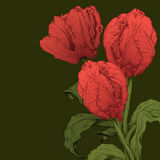Vector tulips flower. Vector greeting card with red tulips flower Stock Photo