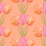 Vector tulips sealess background. Royalty Free Stock Photo