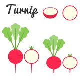 Vector turnip Royalty Free Stock Images