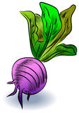 Vector turnip Royalty Free Stock Photography
