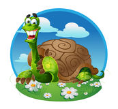 Vector turtle Stock Photo