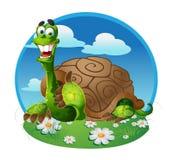 Vector turtle stock photo