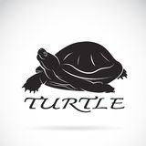 Vector of a turtle on white background. Royalty Free Stock Photography