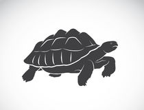 Vector of a turtle on white background. Reptile. Royalty Free Stock Photography