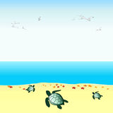 Vector turtles. Illustration of little turtles with starfish on the seaside Stock Images
