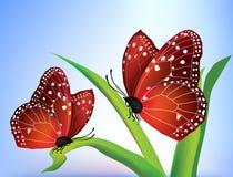 Vector twee vlinders royalty-vrije stock foto