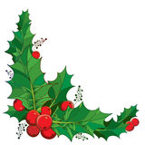 Vector twig with outline green leaves and red berries of Ilex or European Holly  on white background. Stock Photography