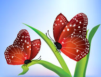 Vector two butterflies Royalty Free Stock Photo
