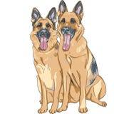 Vector Two dog German shepherd breed Stock Images