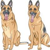 Vector Two dog German shepherd breed Royalty Free Stock Photos