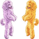 Vector two dogs Poodle breed standing on his hind  Stock Image