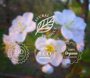 Vector typography eco labels set on spring flower blurry background for card, banner or web design. Royalty Free Stock Photo